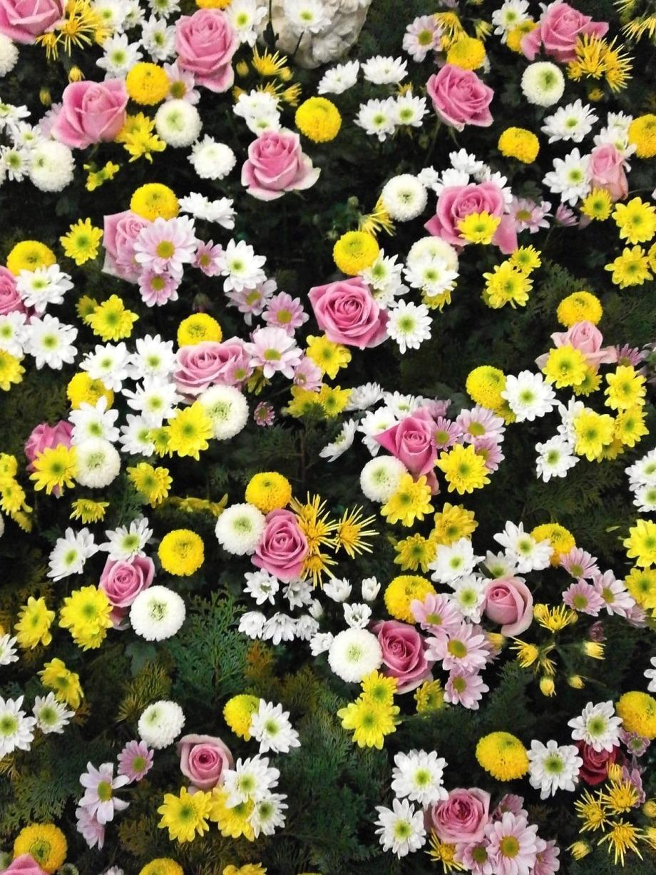 flowers_texture_flower_carpet